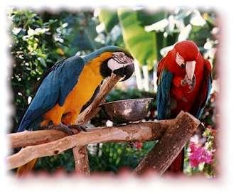 photo-parrots.jpg
